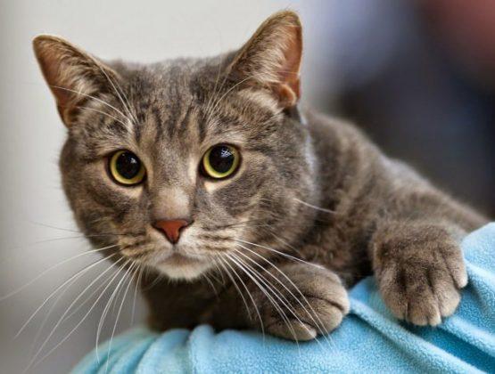 Примария Кишинэу организует бесплатную стерилизацию бездомных кошек
