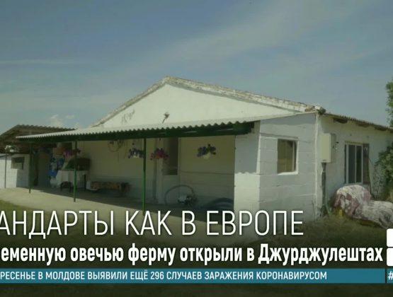 Cупруги из Джурджулешт основали современную овечью ферму