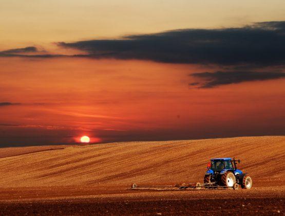 В 2020 году сельское хозяйство Молдовы упало до рекордных показателей. Эксперты назвали главные причины