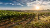В 2020 году молдавские вина завоевали рекордное количество медалей