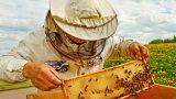 Пчеловодам страны помогут в регистрации бизнеса