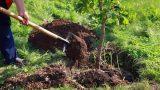 В Молдове будет высажено более 264 тысяч саженцев