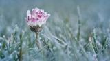 В Молдове ожидаются заморозки до -3 градусов