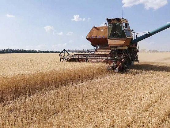 Необходимо обновить запасы: кому распределят пшеницу из Госрезерва