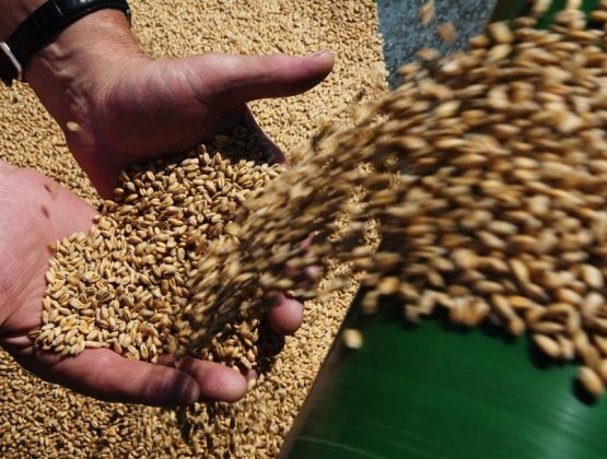 Президентура просит продлить запрет на экспорт пшеницы до конца июня