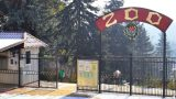 В Кишинёвском зоопарке  появились на свет два бенгальских тигрёнка. Первые фото новорожденных