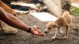 Будет ли принят в Молдове  законопроект о домашних и бездомных животных?