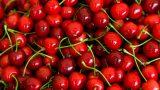 Урожай черешни в этом году может стать рекордно низким за последние шесть лет