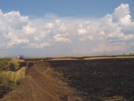 Уничтожено порядка 35 га пшеницы